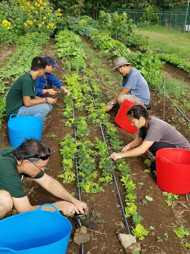 A growing number of young Americans are leaving desk jobs to farm